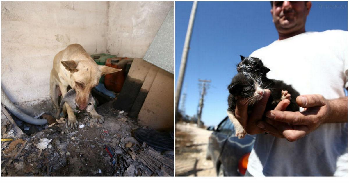 Η Ηρωίδα Σκυλίτσα – Είχε Κρύψει Τα Κουτάβια Της Σε Μία Τρύπα Για Να Τα Προστατεύσει Από Τη Φωτιά