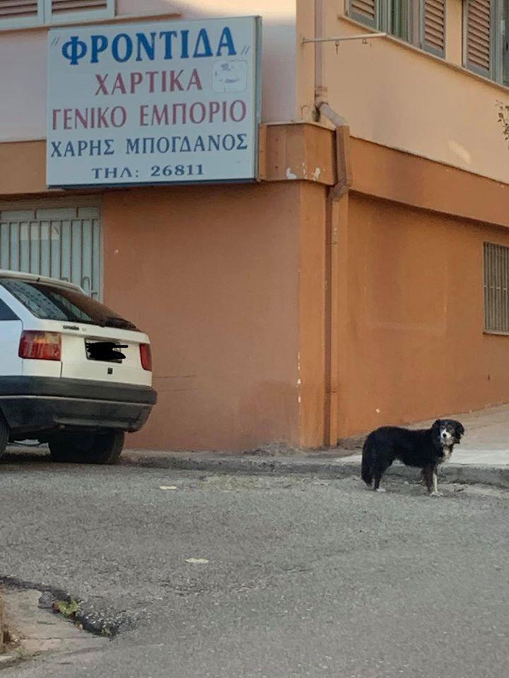 Σκυλίτσα-Χάτσικο στο Αίγιο περιμένει το αφεντικό της που πέθανε έξω από τα μαγαζί του